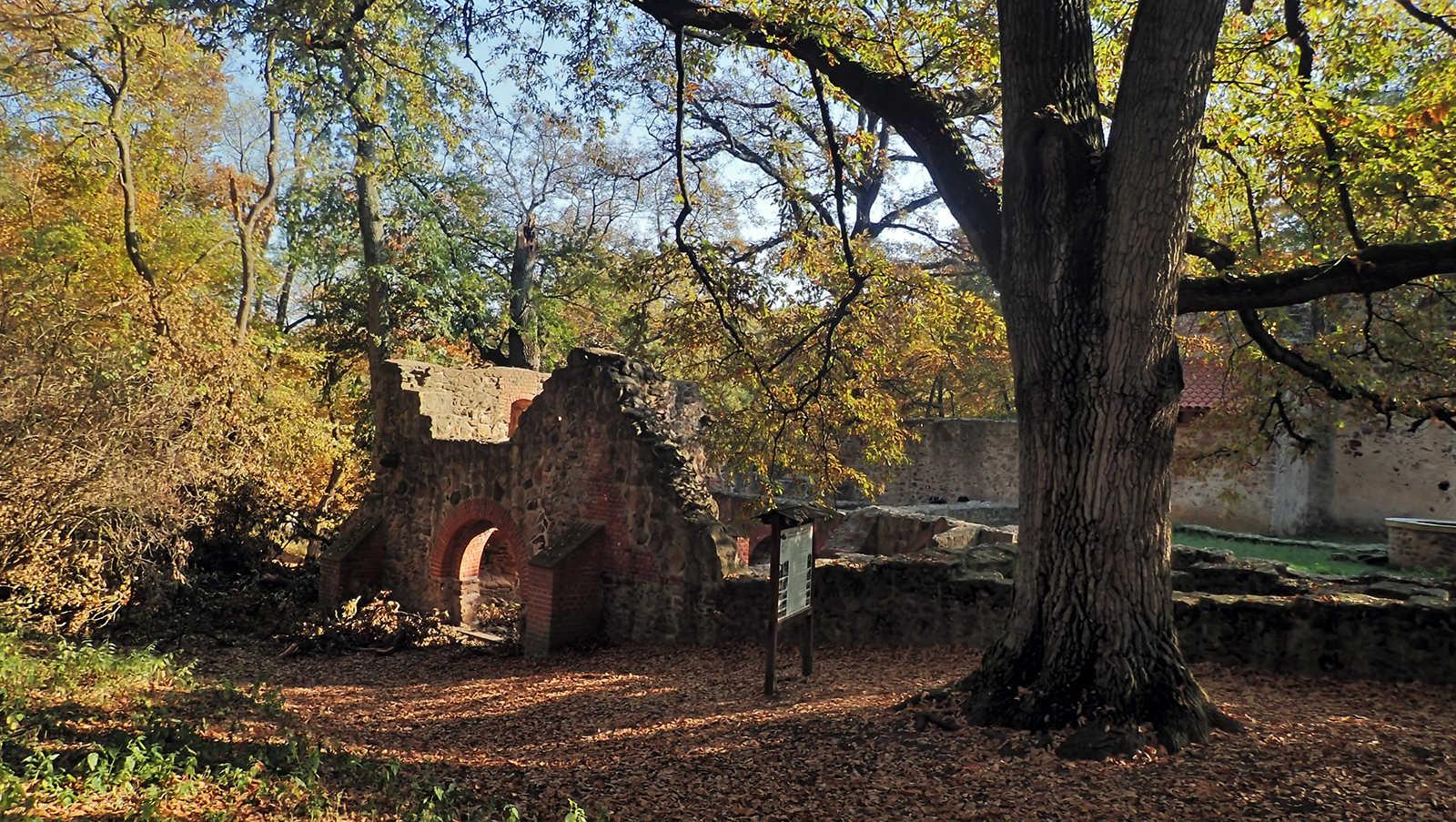 Ruin of Salföld monastery